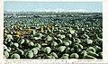 California - A Melon Field (NBY 432175).jpg