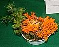 Calocera viscosa 1prg.jpg