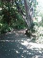 Camino en salamanca cyty - panoramio.jpg