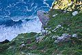 Cape Point 2014 16.jpg