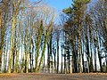 Car park at the Natural Burial Ground near Cardiff - geograph.org.uk - 1156627.jpg