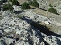 Castellar de Meca 2016 Wiki takes Ayora 08.jpg