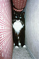 Cat hiding.jpg