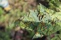 Caterpillars1.jpg