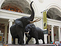 Chicago Illinois - Elephants - Field Museum.jpg