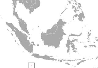 Christmas Island shrew species of mammal