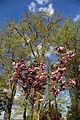 Churchyard trees at Stapleford Tawney, Essex, England.jpg