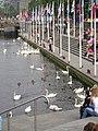 Cigni in Amburgo - 2005.JPG