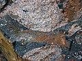 Clast-rich impact pseudotachylite (Sudbury Breccia, Paleoproterozoic, 1.85 Ga; Windy Lake Northwest roadcut, Sudbury Impact Structure, Ontario, Canada) 53 (46841663235).jpg