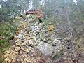 Cliff covered with many different mosses, lichens and grasses - 3.jpg