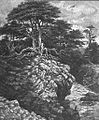 Cliffs And Forest At Monterey - Pg-373.jpg