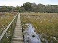 Coastal Path - geograph.org.uk - 1045446.jpg