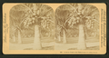 Cocoanut (coconut) trees in the white sands of Florida, U.S.A, from Robert N. Dennis collection of stereoscopic views 9.png