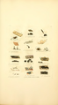 Coloured Figures of English Fungi or Mushrooms - t. 373.png
