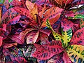 Coloured Leaves-01+ (131019673).jpg