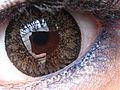Contact Lens Macro.JPG