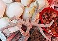Corals, coxs bazar.jpg