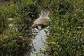 Coringa reserve forest park mangrove forest 09.jpg