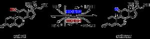 11β-Hydroxysteroid dehydrogenase type 1 - Image: Cortisol cortisone en