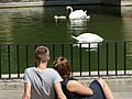 Couple with Swans - Palma de Mallorca - Mallorca - Spain (14295299949).jpg