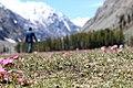 Covering the Blooming Flowers near Lake Saifullah.jpg