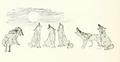 Coyote chorus - Seton Thompson (1909).png