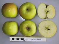 Cross section of Sissons's Worksop Newtown, National Fruit Collection (acc. 1955-143).jpg