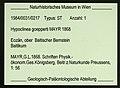 Ctenobethylus goepperti NHMW1984-31-217 specimen tag.jpg