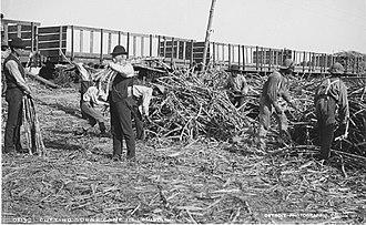 Thibodaux massacre - Image: Cuttingsugarcaneinlo uisiana 5
