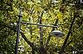DSC 7090 Lampione in prossimità della Fontana Vecchia.jpg