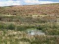 Damp moorland below Crawberry Hill - geograph.org.uk - 1701009.jpg