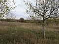 Das Heidefeld Großbeeren on 2019-11-05 34.jpg