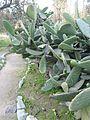 Day trip to the Botanical Gardens - panoramio (34).jpg