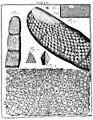 De Augen Gemüths (Ledermüller) 158.jpg
