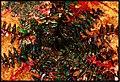 December AVIVO ALENTEJO Colors of Atlantic Ocean Albufeira - Master Magic Portugal Photography 1988 - panoramio.jpg