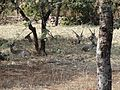 Deers resting in the park 04.jpg