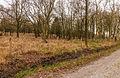 Delleboersterheide – Catspoele Natuurgebied van It Fryske Gea. Omgeving van Catspoele 016.jpg