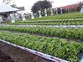 Demostração agricula.jpg