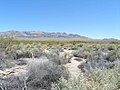 Desert Environment in the Desert National Wildlife Refuge.jpg