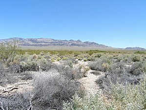 Desert National Wildlife Refuge - Desert Environment in the Desert National Wildlife Refuge
