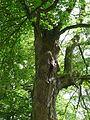 Detail zámeckého stromu v parku.jpg