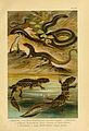 Deutschlands Amphibien und Reptilien (5981669433).jpg