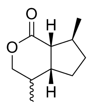 Cat pheromone - Chemical structure of dihydronepetalactone