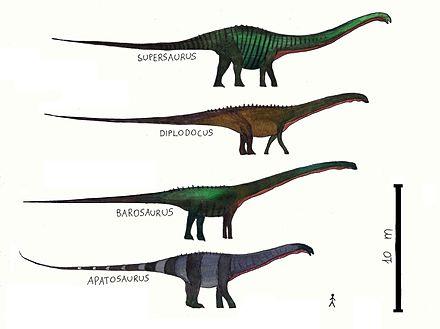 apatosaurus vs diplodocus - HD3296×2464