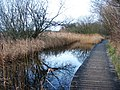 Dipping Pond or Boardwalk Pond - geograph.org.uk - 648986.jpg