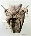 Disease of the larynx illustration Wellcome L0014816.jpg