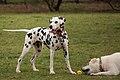 Dog park photos (14293239497).jpg