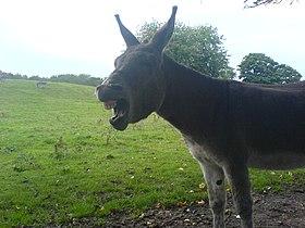 Donkey-06.jpg
