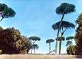 Doria Pamphili – Pinu eembra (5168262500).jpg