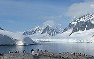Doumer Island and Penguins.jpg